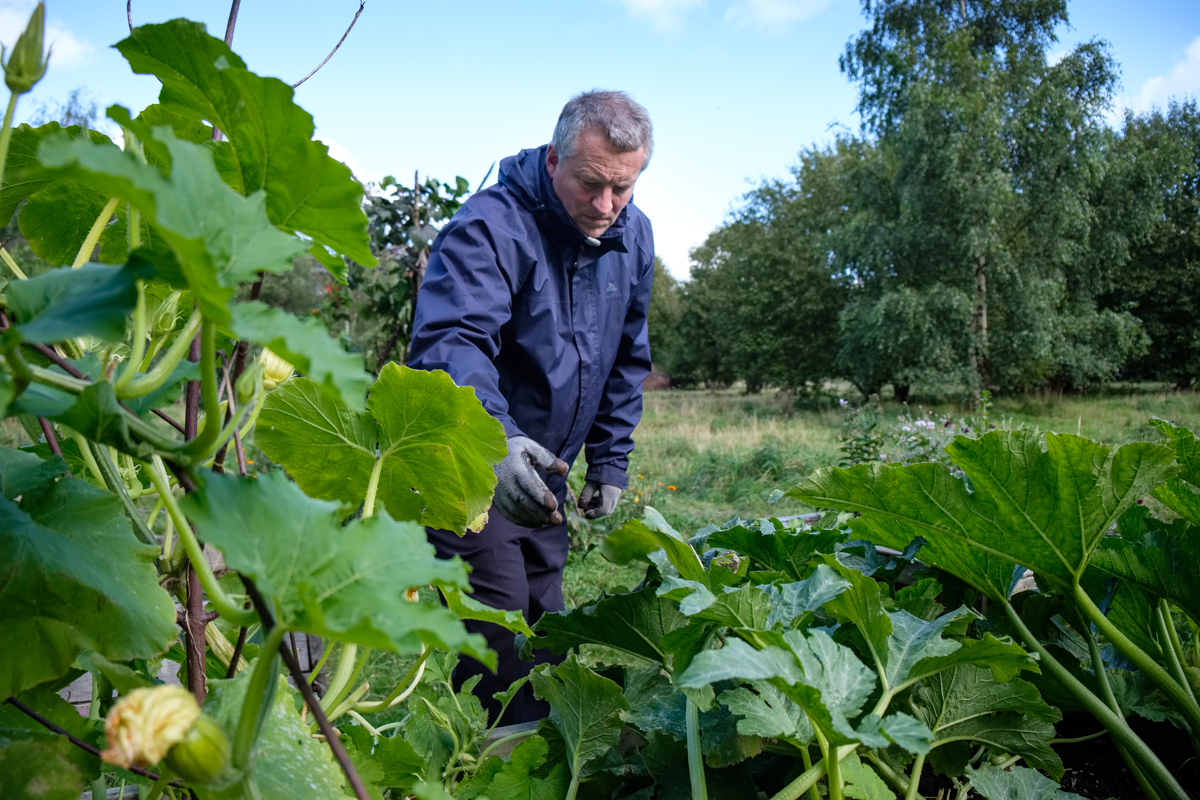 Gardener and local activist – Martin Goddard attending the allotments at The Children's Wood and North Kelvin Meadow, Glasgow